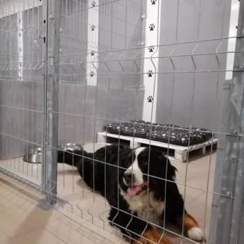 Śliczny pies w hotelu dla psów